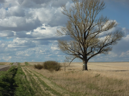 Swift Current's Lone Tree