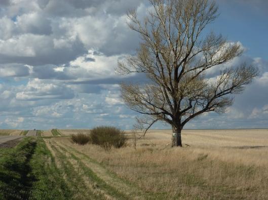 Swift Current's Lone Tree